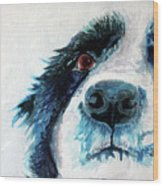 Bailey Our Border Collie Wood Print
