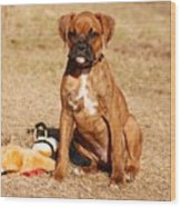Bailey The Boxer Puppy Wood Print
