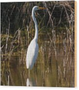 Bailey Tract Egret Two Wood Print