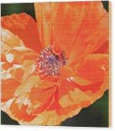 Bailey's Poppy Wood Print