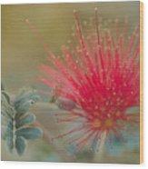 Baja Fairy Duster Wood Print