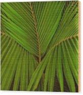 Bajo El Verdor De Las Palmas Wood Print