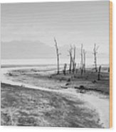 Bako National Park At Low Tide. Wood Print