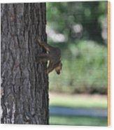 Balancing A Nut Wood Print