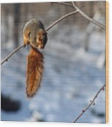 Balancing Squirrel Wood Print