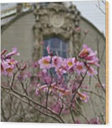 Balboa Park Building And Spring Flowers - San Diego Wood Print