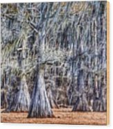 Bald Cypress In Caddo Lake Wood Print