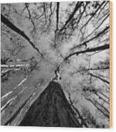 Bald Cypress Sky Wood Print