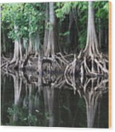 Bald Cypress Trees Along The Withlacoochee River Wood Print