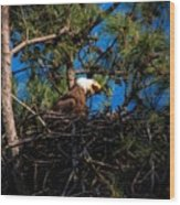 Bald Eagle In The Nest Wood Print
