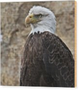 Bald Eagle - Portrait 2 Wood Print