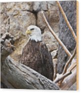 Bald Eagle - Portrait Wood Print