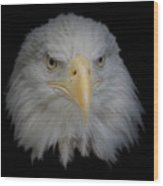 Bald Eagle 1 Wood Print