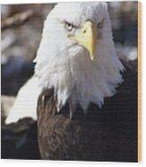 Bald Eagle 1 Wood Print
