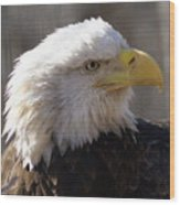 Bald Eagle 3 Wood Print