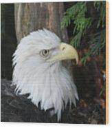 Bald Eagle #8 Wood Print