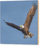 Bald Eagle And Fish Wood Print