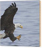 Bald Eagle At Ready Wood Print