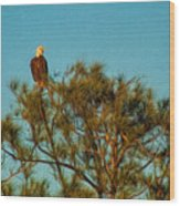 Bald Eagle Burnt Store Marina Florida Wood Print