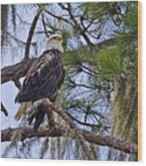 Bald Eagle By H H Photography Of Florida Wood Print