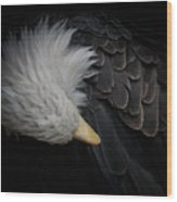 Bald Eagle Cleaning Wood Print