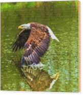 Bald Eagle Cutting The Water Wood Print