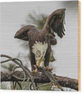 Bald Eagle Eating Fish Wood Print