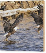 Bald Eagle Fishing Pano Wood Print