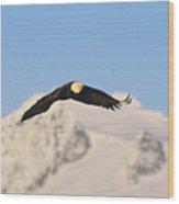 Bald Eagle Flying In Alaska Wood Print