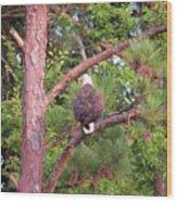 Bald Eagle Fresh Catch Wood Print