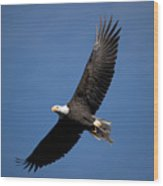Bald Eagle I Wood Print
