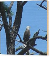 Bald Eagle II Wood Print