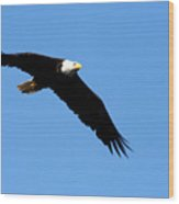 Bald Eagle IIi Wood Print