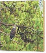 Bald Eagle In A Pine Tree, No. 5 Wood Print