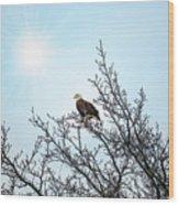 Bald Eagle In A Tree Enjoying The Sunlight Wood Print