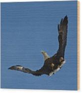 Bald Eagle In Flight 031520168885 Wood Print
