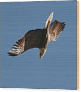 Bald Eagle In Flight 031520168936 Wood Print