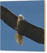 Bald Eagle In Flight 031520169038 Wood Print