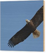 Bald Eagle In Flight 031520169113 Wood Print