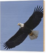 Bald Eagle In Flight Wood Print by John Hyde - Printscapes