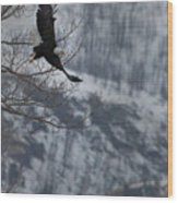 Bald Eagle In Flight-signed-#4014 Wood Print