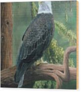 Bald Eagle In Pastel Wood Print