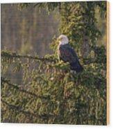 Bald Eagle In Pine Wood Print