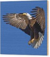 Bald Eagle Landing  Wood Print
