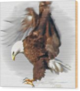 Bald Eagle Landing Wood Print