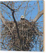 Bald Eagle Lookout  3661 Wood Print