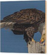 Bald Eagle Lunch Wood Print