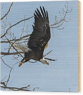 Bald Eagle Makes An Aggressive Dive Wood Print