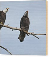 Bald Eagle Music Wood Print