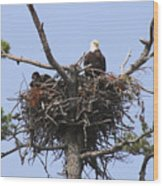 Bald Eagle Nest Wood Print